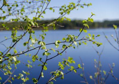 Möt våren på Herrgården i Grythyttan