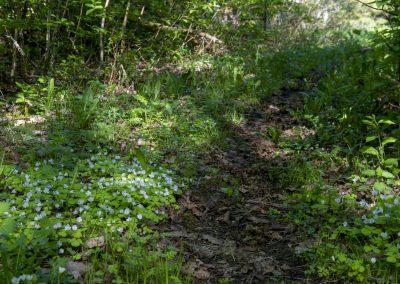 Naturstigen Grythyttan på våren